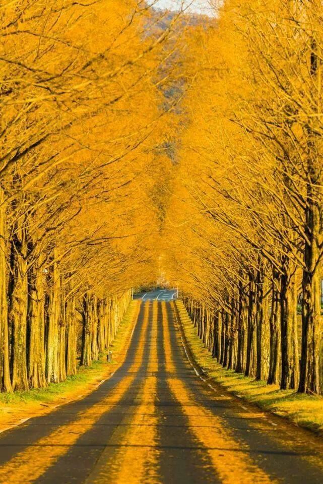 golden road shiga japan