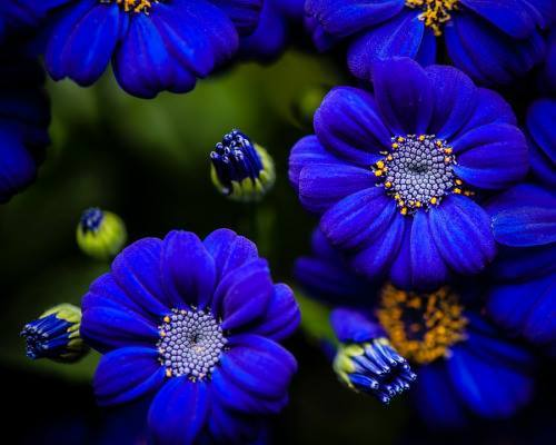 blue4u