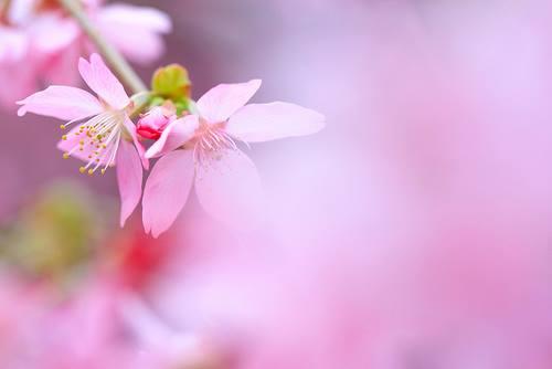flower story23